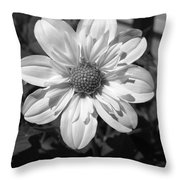 Dahlia Named Alpen Cherub Throw Pillow