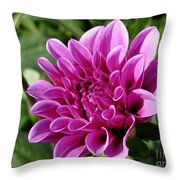 Dahlia Named Blue Bell Throw Pillow