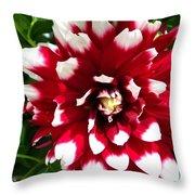 Dahlia Named Duet Throw Pillow