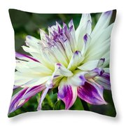 Dahlia No. 2173 Throw Pillow