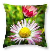 Daisies In Januray Throw Pillow
