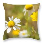 Daisies On Summer Meadow Throw Pillow