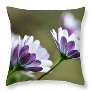 Daisies Seeking The Sunlight Throw Pillow