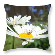 Daisies With Phalangiid Vistitor Throw Pillow