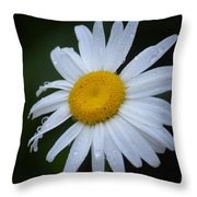 Daisy 14-3 Throw Pillow