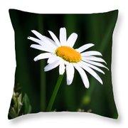Daisy - Bellis Perennis Throw Pillow by Bob Orsillo