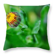 Daisy Bud Ready To Bloom Throw Pillow