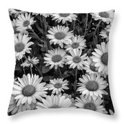 Daisy Cluster Vermont Flowers In Black And White Throw Pillow