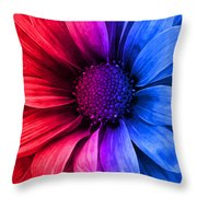 Daisy Daisy Red To Blue Throw Pillow