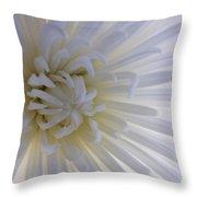 Daisy Dream Glow Throw Pillow