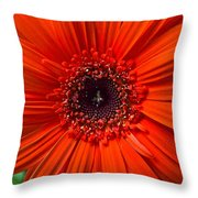 Daisy In Full Bloom Throw Pillow
