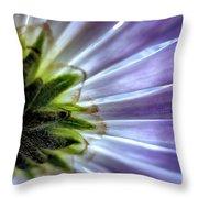 Daisy Petals Abstract Macro Throw Pillow
