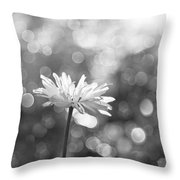 Daisy Rain Throw Pillow by Theresa Tahara