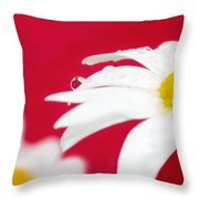 Daisy Reflecting On Red V2 Throw Pillow