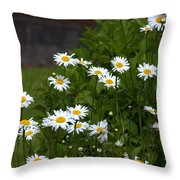 Daisy Splendor Throw Pillow