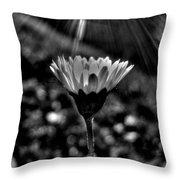 Monochrome Daisy Under Sun Throw Pillow