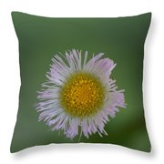 Daisy Weed Series Photo A Throw Pillow