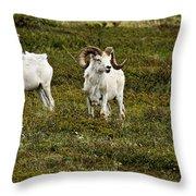 Dall Rams On Alert Throw Pillow