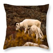Dall Sheep Grazing Throw Pillow
