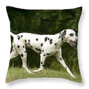 Dalmatian Running Throw Pillow