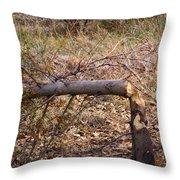 Dam Beavers Again Throw Pillow