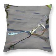 Damselflies Mating II Throw Pillow