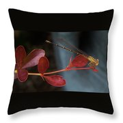 Damselfly On End Of Burning Bush Stem             Summer               Indiana Throw Pillow