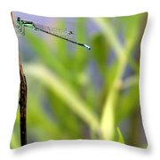 Damselfly Courting Throw Pillow