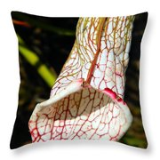Dana's Delight Carnivorous Pitcher Plant Throw Pillow