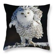 Dance Of Glory - Snowy Owl Throw Pillow