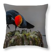 Dancing For The Ladies Throw Pillow