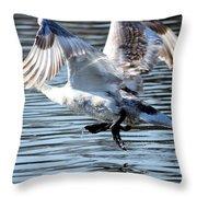 Dancing Swan Throw Pillow