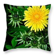 Dandelion Farm Throw Pillow