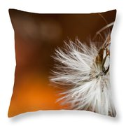 Dandelion Seed Head And Fall Color Background Throw Pillow