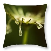 Dandelion Stub With Drop Throw Pillow
