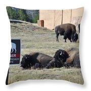 Danger Do Not Approach Wildlife Throw Pillow