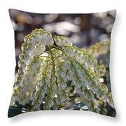 Dappled Pieris Japonica Throw Pillow