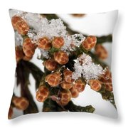 Darby Spring Throw Pillow