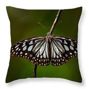 Dark Glassy Tiger Butterfly On Branch Throw Pillow