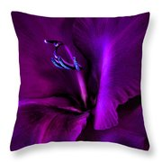 Dark Knight Purple Gladiola Flower Throw Pillow by Jennie Marie Schell