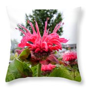 Dark Pink Bergamot Throw Pillow