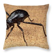 Darkling Beetle Bends Down To Drink Dew Throw Pillow