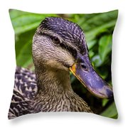 Darling Duck Throw Pillow