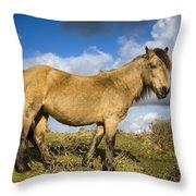Dartmoor Pony Throw Pillow