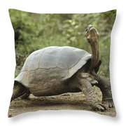 Darwins Finch And Volcan Alcedo Giant Throw Pillow