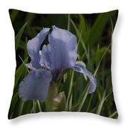 Dashing Pale Violet Iris Throw Pillow