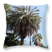 Date Tree At The Arboretum Throw Pillow