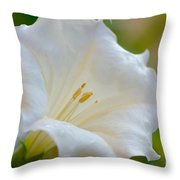 Datura Hybrid White Flower Throw Pillow