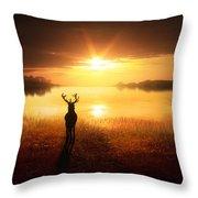 Dawn's Golden Light Throw Pillow