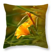 Day Lily Backlit Throw Pillow